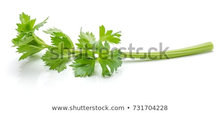 Verde apio blanco alimentos color cocina Foto stock © ozaiachin