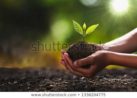 Palánta kéz új kert növények kettő Stock fotó © ferdie2551