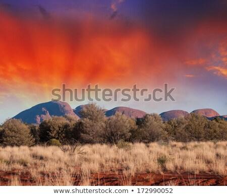 Estrada de terra pneu parque Austrália estrada paisagem Foto stock © iofoto