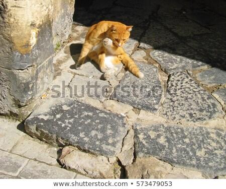 Kíváncsi cica pihen dél kiscica arc Stock fotó © taviphoto