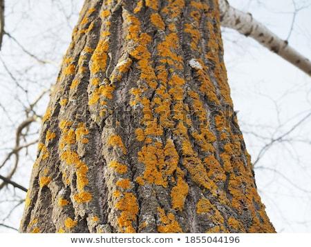 オレンジ 菌 成長 ツリー 森 自然 ストックフォト © brm1949