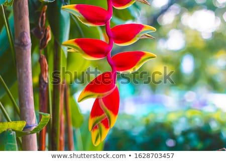 oranje · kreeft · klauw · bloem · gele · bloem - stockfoto © stocker