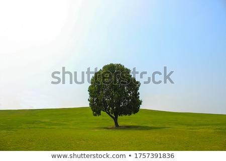 seuls · arbre · champ · d'herbe · ciel · paysage · domaine - photo stock © cosma