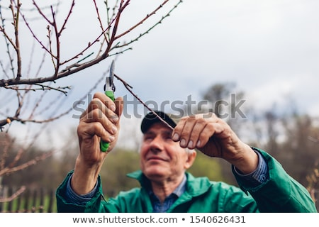 homme · arbre · vu · main · bois - photo stock © adamr