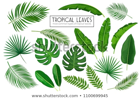 philodendron leaves, vector  Stock photo © beaubelle