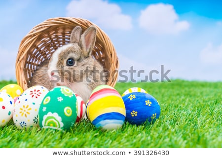 Easter bunny basket with eggs stock photo © cypher0x