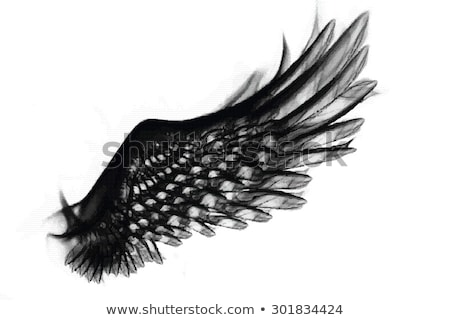 Abstract Wings Stock photo © Soleil