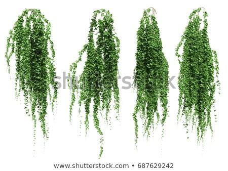 緑 · 茂み · シームレス · テクスチャ · 花 · 春 - ストックフォト © ondrej83