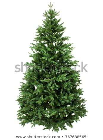 geïsoleerd · witte · christmas · vakantie · naald - stockfoto © baur