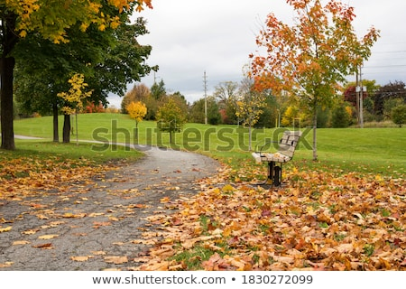 Pile of Wood near a Path in the Forest with Red Leaves Stock photo © Kayco