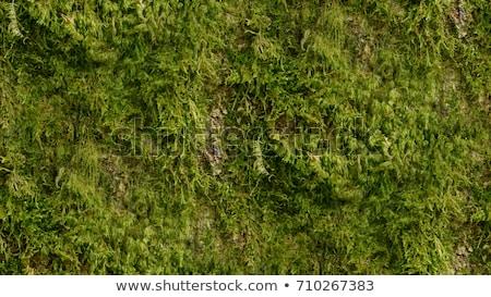 Groene mos bos blad zomer Stockfoto © OleksandrO