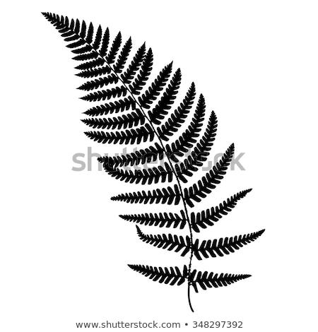 Páfrány fekete sziluett erdő természet nyár Stock fotó © gladiolus