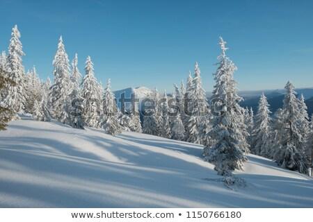 Snow-covered pine trees, blue sky and sun. Stock photo © Leonardi
