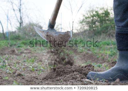 человека растительное саду почвы новых роста Сток-фото © stevanovicigor