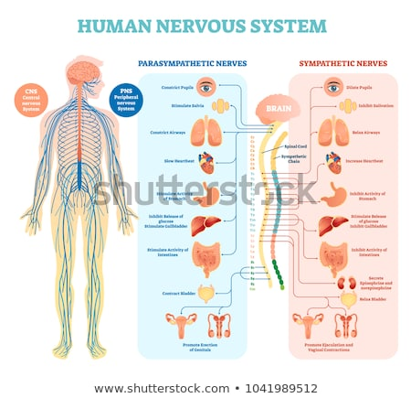 人間 神経系 白 医療 背景 薬 ストックフォト © bluering