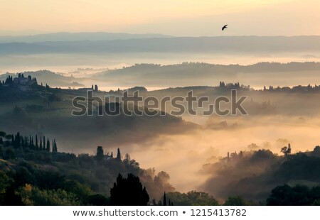 Green Tuscany landscape at morning time with birds Stock photo © Taiga