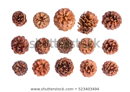 variety of fifteen different brown pine cones stock photo © ozgur