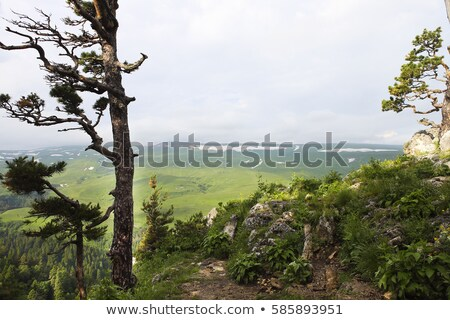 valley the scenery is breathtaking lagonaki caucasus russia stock photo © dashapetrenko