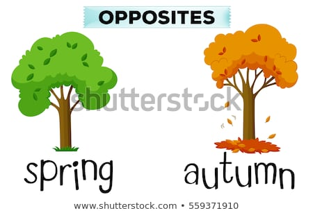 Opposite words for spring and autumn Stock photo © bluering