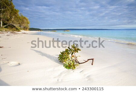 Licht strand rotsen natuur oceaan Stockfoto © lovleah