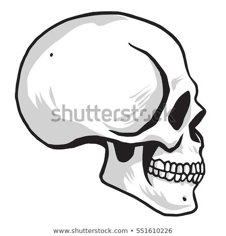 skull vector illustration sideview stock photo © doddis