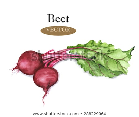 Watercolor hand drawn illustration of beetroot Stock photo © Sonya_illustrations