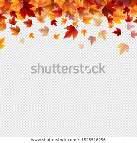 sale banner with leaves border transparent background stock photo © barbaliss