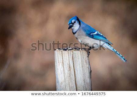 Blauw paal vogel vergadering tuin natuur Stockfoto © saje