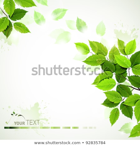 Stock photo: Green Leaves Background With Blot