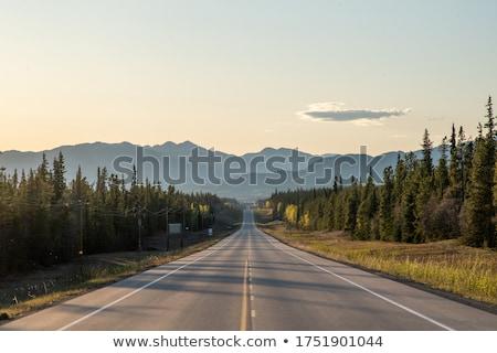 Strada boschi foresta luce foglia Foto d'archivio © taviphoto