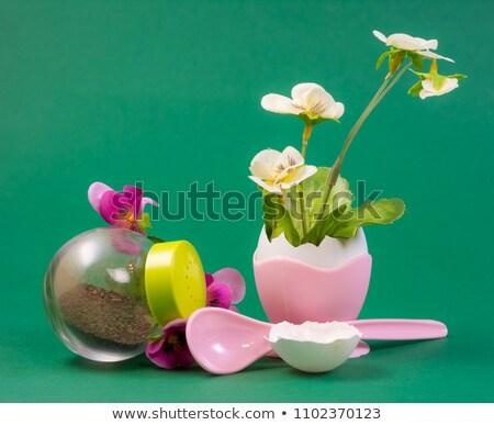 Naturaleza muerta flor creciente fuera cáscara de huevo primavera Foto stock © manfredxy