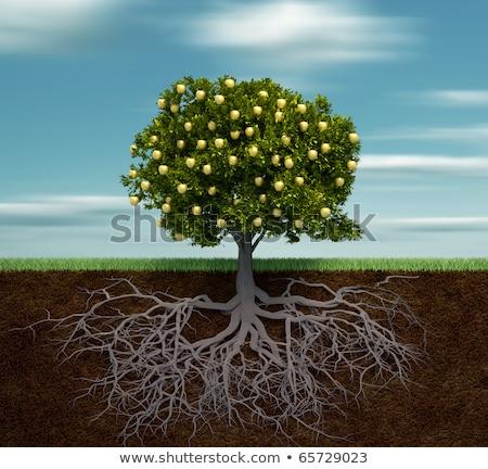 Manzano raíces ilustración árbol hoja fondo Foto stock © Krisdog