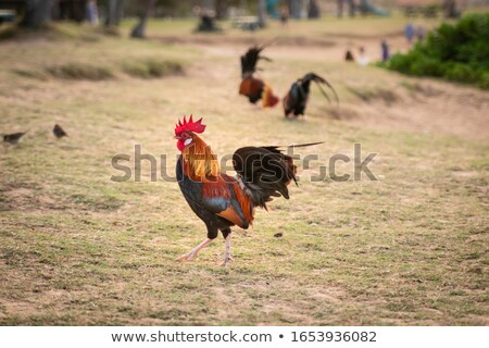 karga · doğa · kuş · tüy - stok fotoğraf © backyardproductions