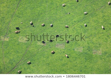 agricultural farmland with feeding ground for cows aerial view stock photo © artjazz