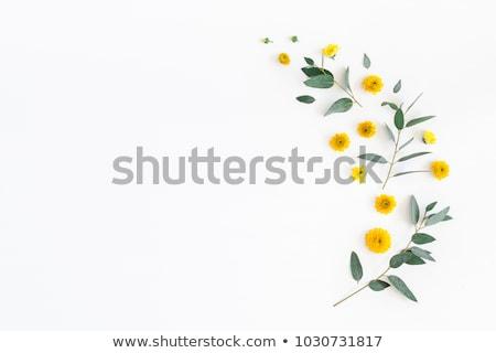 Stok fotoğraf: Flowers Flat Lay Composition