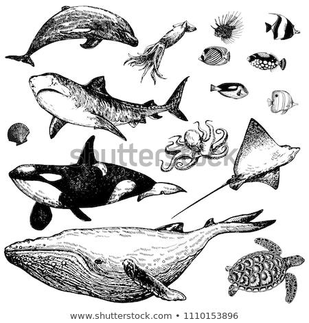Hand drawn butterflyfish. Vector illustration in sketch style Stock photo © Arkadivna