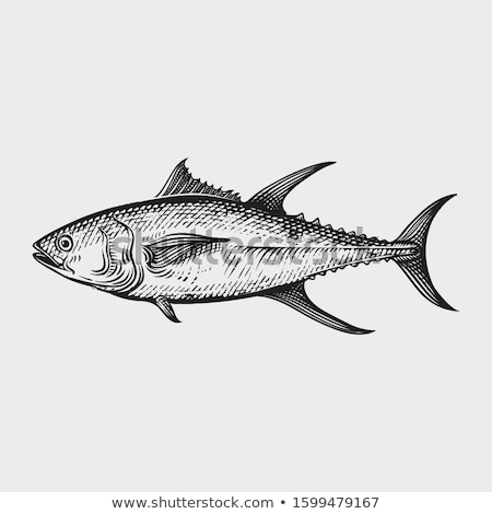 Hand drawn tuna. Vector illustration in sketch style. Stock photo © Arkadivna
