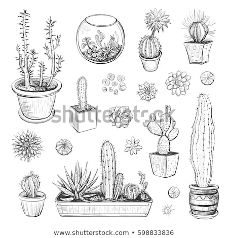 Sappig bladeren agave cactus vector Stockfoto © pikepicture