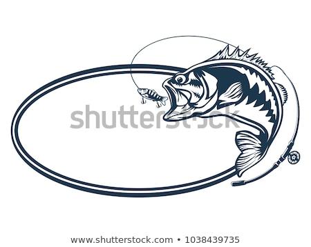 establecer · pesca · diseno · elementos · peces - foto stock © netkov1