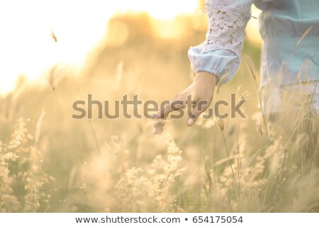 Foto stock: Mulher · flores · campo · mulher · bonita · vestido · branco