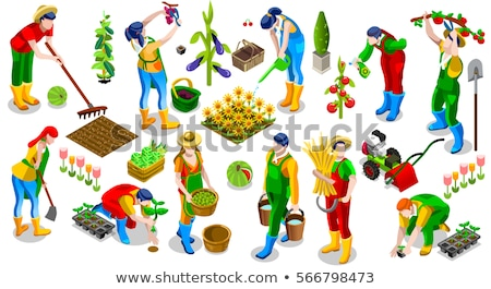 Vector isometric gardener working in garden Stock photo © tele52