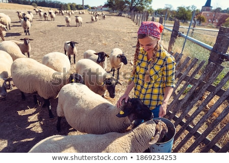Famer woman with her flock of sheep Stock photo © Kzenon