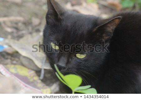 Китти фото котенка изолированный белый камеры Сток-фото © silent47