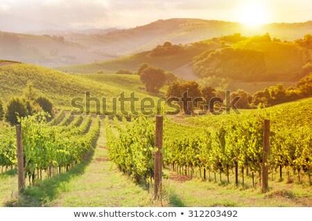 Soleado paisaje vina francés vino Foto stock © karandaev