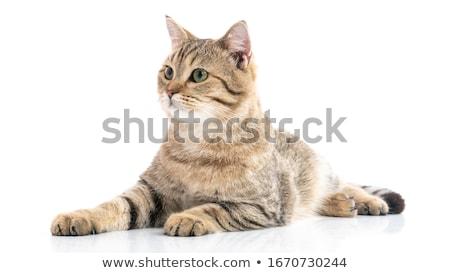 Mooie kat mooie vrouwelijke Stockfoto © fxegs