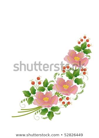 Wild rose with green sheet Stock photo © RuslanOmega