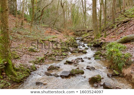 cascade of water through forest Stock photo © cozyta