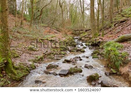 カスケード 水 森林 ツリー 自然 夏 ストックフォト © cozyta