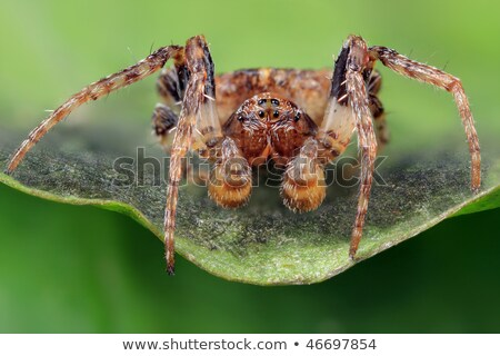 spider crawling in extreme close up stock photo © gewoldi