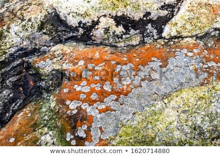 kő · felület · moha · full · frame · természetes · mutat - stock fotó © arrxxx
